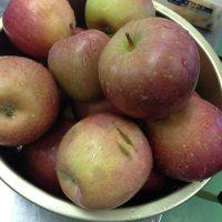 りんごの加工開始!